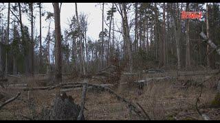 Reportaż: Puszcza Białowieska - leśne cmentarzysko