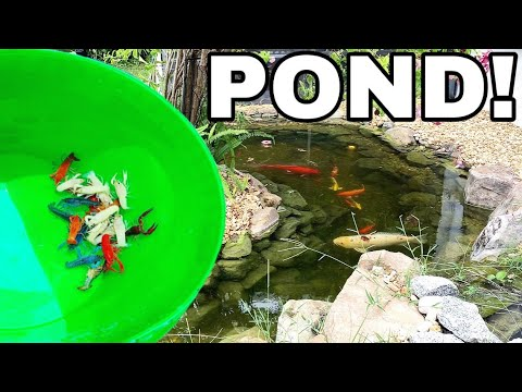 COLORFUL Crayfish LOBSTER OASIS POND For BREEDING!