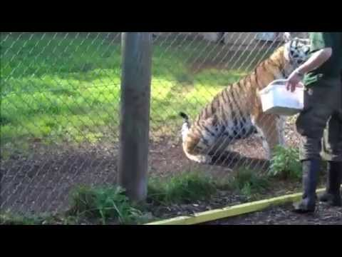 2011 Sep East Anglia Zoos