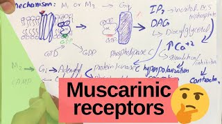 Muscarinic Receptors - Cholinergic receptors | PHARMACOLOGY.