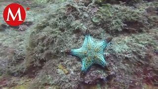El mundo submarino del mar de Cortés, Sonora | Conexión Milenio