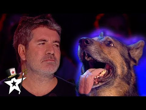 Simon Cowell Is HEARTBROKEN Over Police Dog | Magicians Got Talent