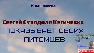 И как всегда Сергей Суходоля Кегичевка показывает своих питомцев