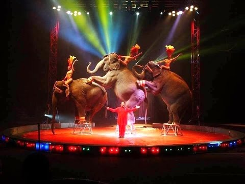 Image result for lawton oklahoma circus