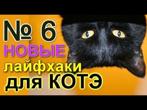 Образ кошки в мифологии, фольклоре и русской литературе
