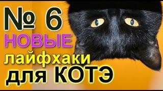 лайфхаки для кота 6 (линька)
