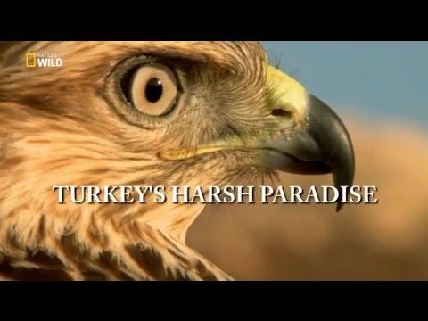 Türkiye'nin Vahşi Doğası Belgesel