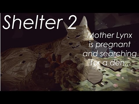 Shelter 2, Mother Lynx is Pregnant!!! |