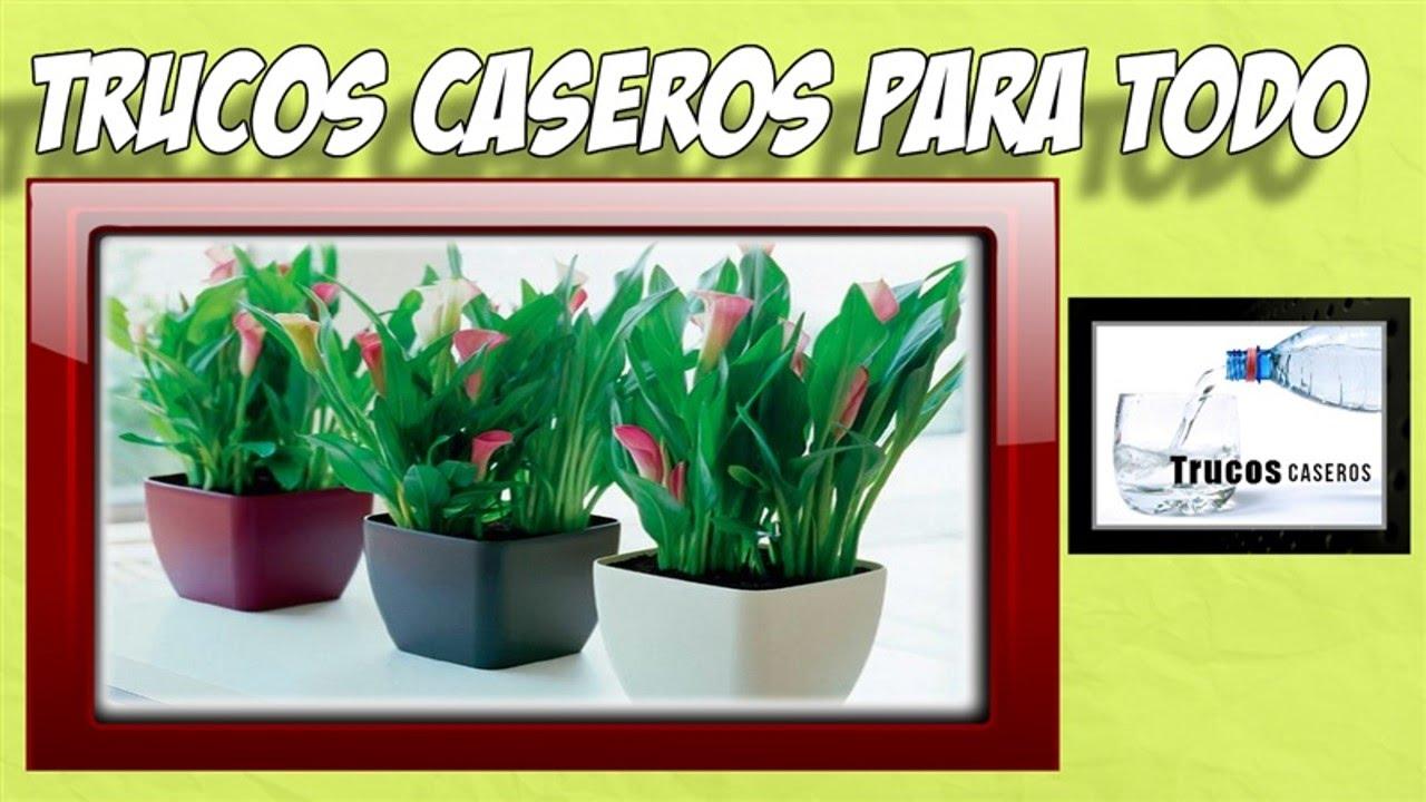 Trucos y remedios caseros naturales para abonar las plantas de tu ...