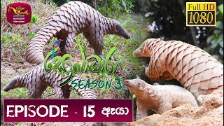 Sobadhara - Sri Lanka Wildlife Documentary | 2019-06-28 | Pangolin in Sri Lanka Thumbnail