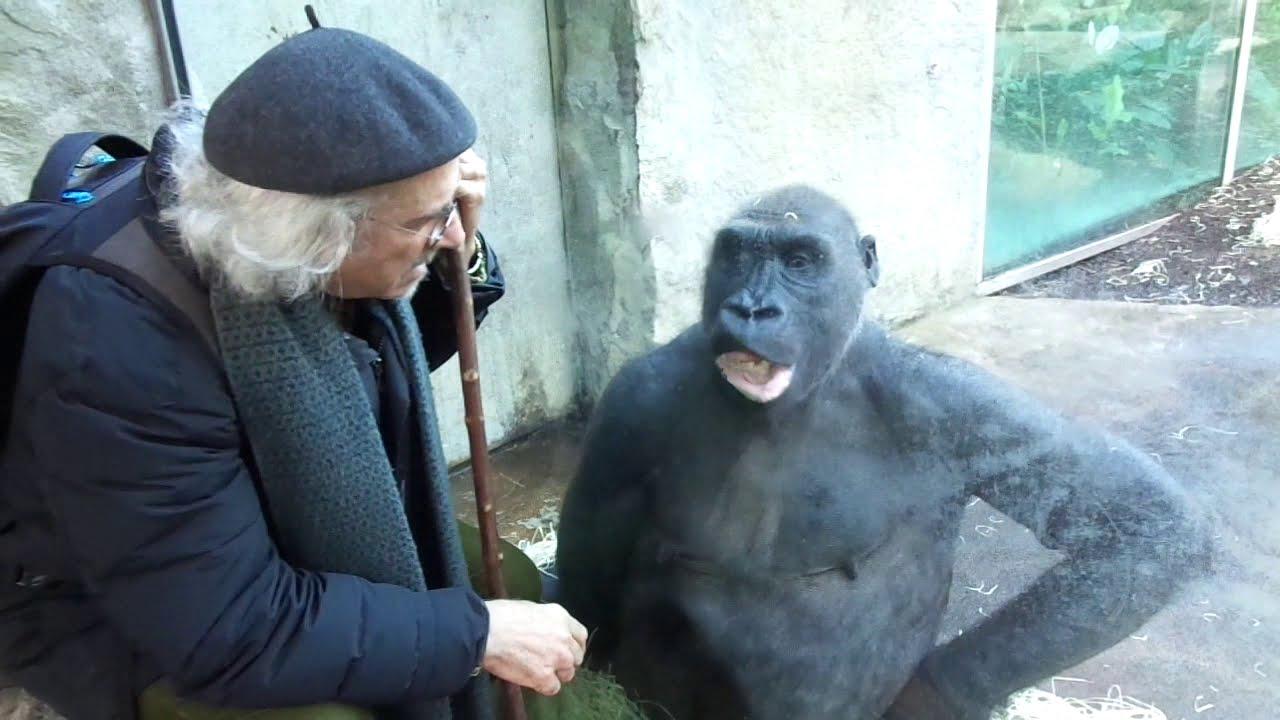 Gorilla-Flüsterer by © Raymond Hummy ART Gorilla Whisperer