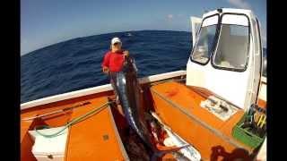La pêche professionnelle sur dcp (partie 10)