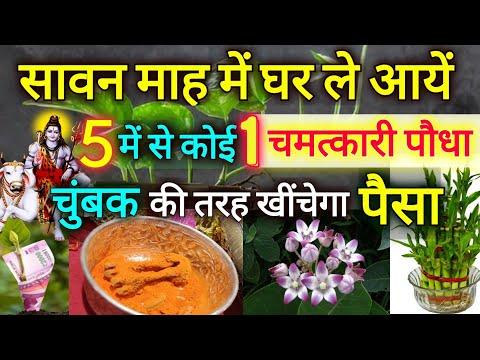 सावन माह खत्म होने से पहले घर ले आयें 5 में से कोई 1 चमत्कारी पौधा, चुंबक की तरह खींचेगा पैसा Vastu