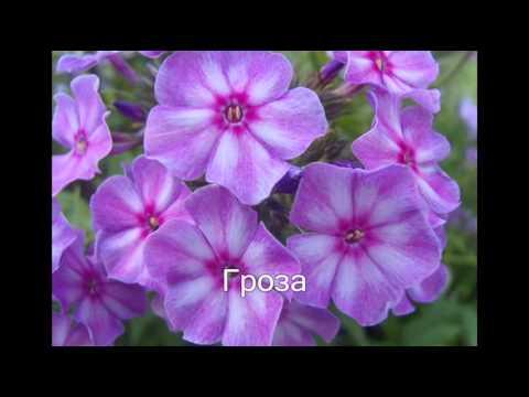 Цветковые растения Википедия