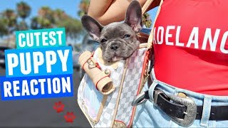 PUPPY GOES SHOPPING!! Buying treats, toys, food, and her own merch ;) wink wink