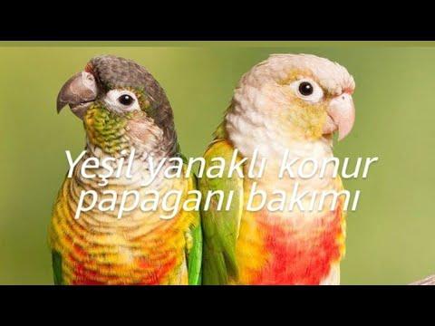 Efsane Papağan Paşa.🦅