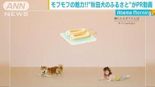 著名人を虜に・・・「モフモフ」の魅力の秋田犬(19/05/10)