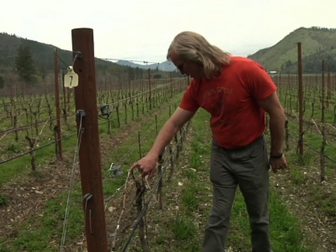Oregon Wineries Branch Out Into Legal Marijuana