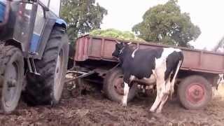 Jak dogodzić krowie i glebie czyli Orkan wpadki rolnicze
