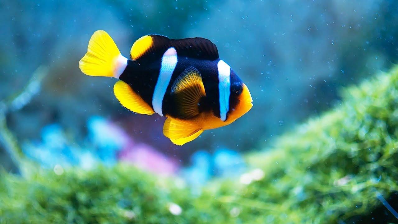 Fish aquarium how to maintain - How To Maintain Fish Tank When Away Aquarium Care
