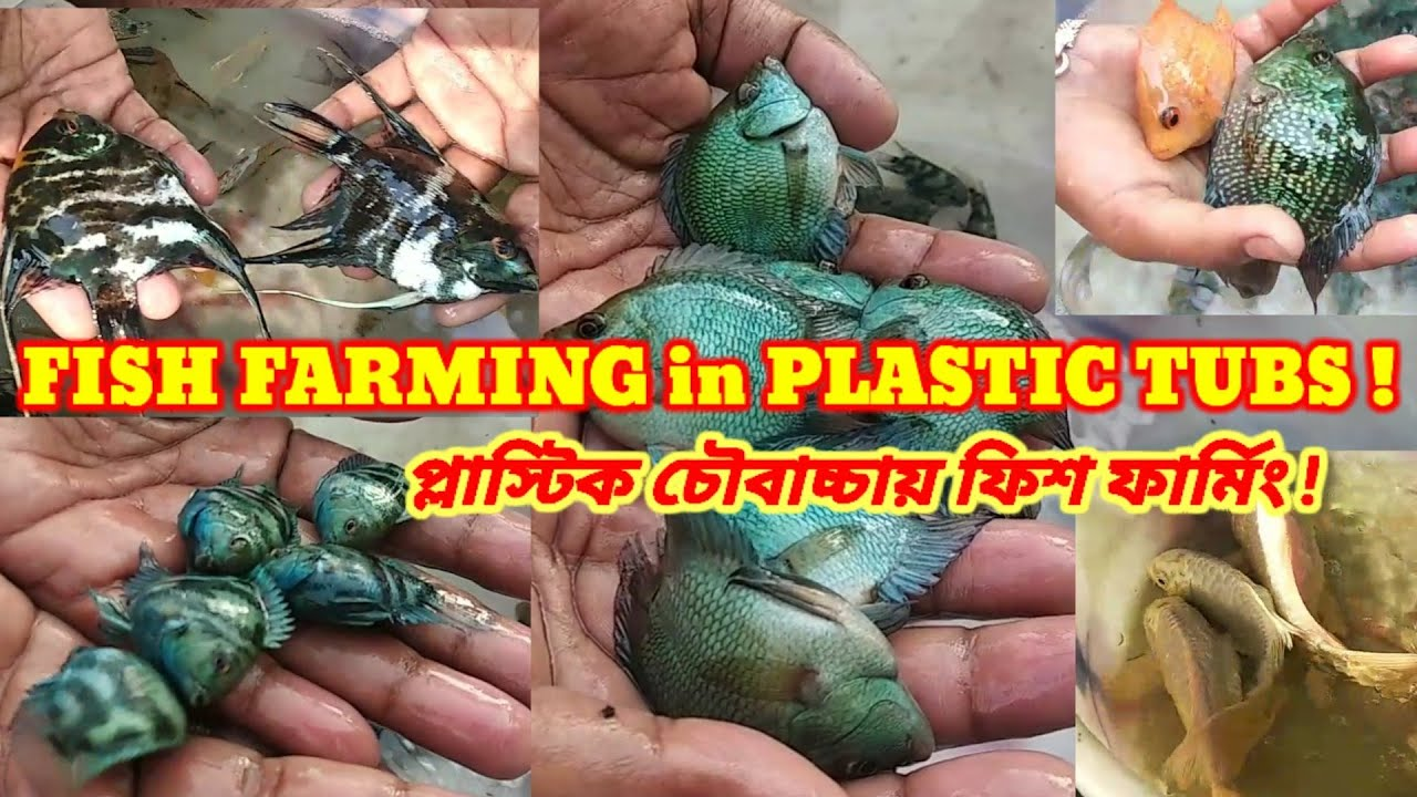 FISH FARMING in PLASTIC PONDS 2021🐕CICHLID FISH FARMING in HOWRAH🐕ORNAMENTAL FISH FARMING