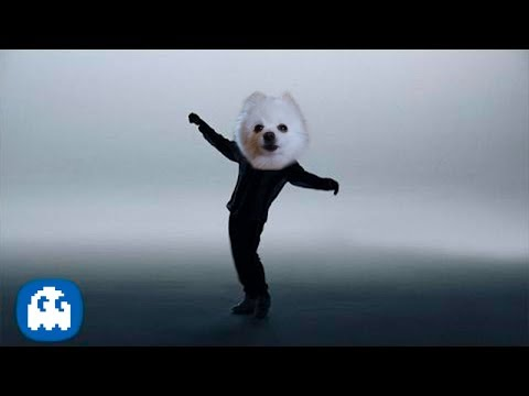 Bruno Mars - That's What I Like [Cover Perros]