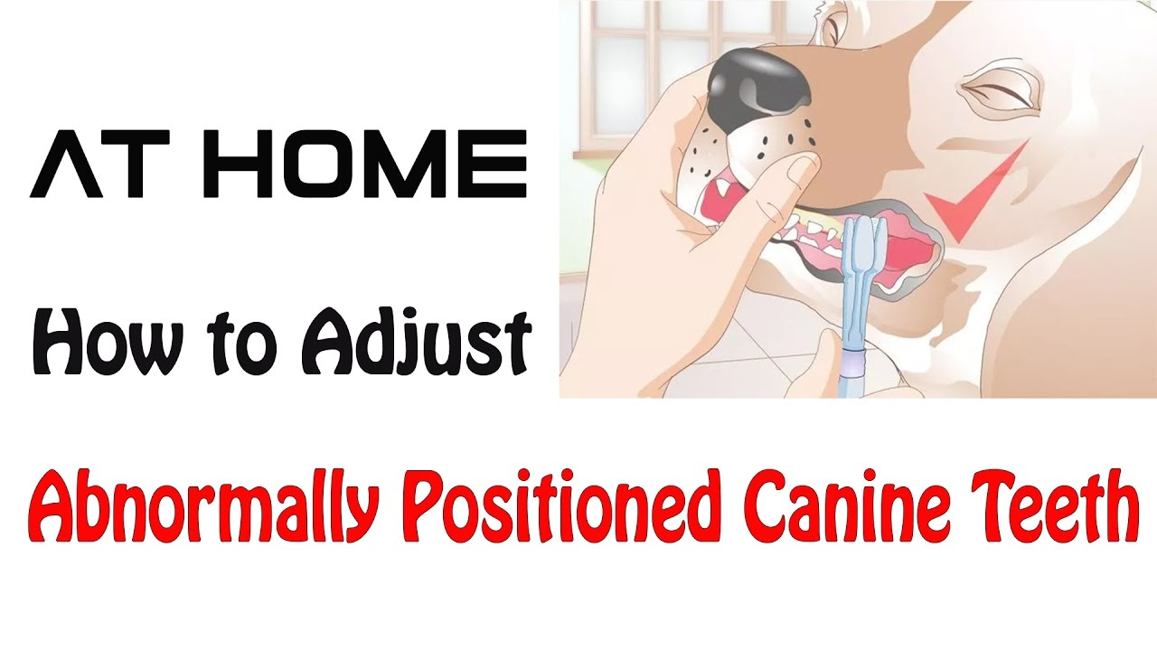 How to Adjust Abnormally Positioned Canine Teeth