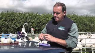 How to Guide on injecting sheep July 14