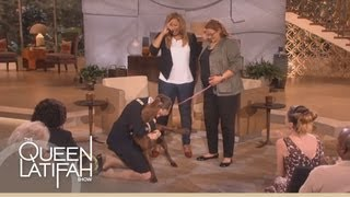 Dogs on Deployment Reunites Soldier's Dog on the Queen Latifah Show