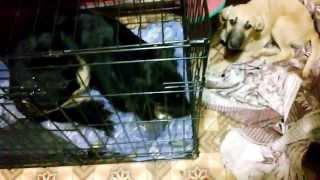 2. Молодая собака со стоянки ( после стерилизации)