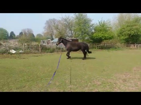 Emma lunging 1st time back after a long old winter
