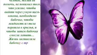 Урок Бабочки притча, или Как добиться Успеха