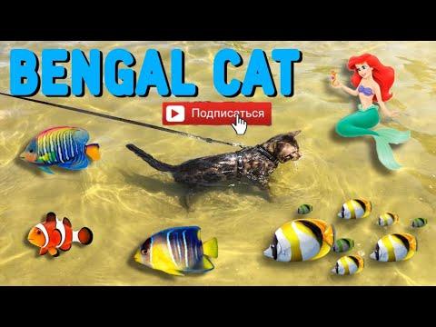 Бенгальская кошка �� Интересные факты о кошках �� Bengal cat and wate