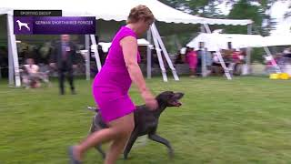 Pointers German Shorthaired | Breed Judging 2021