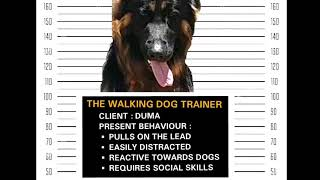 Combo training package - Focus - loose lead - non reactivity - social etiquette