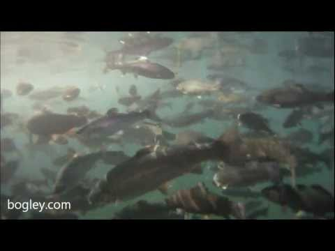 Cold Springs Trout Farm GoPro HD