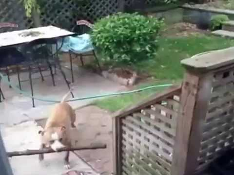 so stupid dog