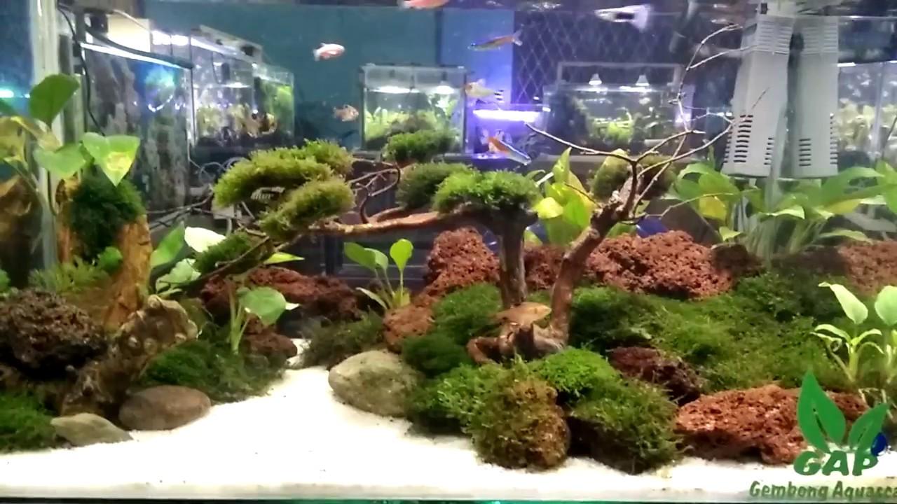 Aquascape Contest 2017 - YouTube