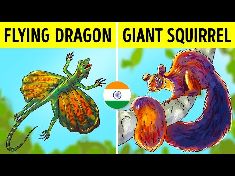 VIDEO: 7 of the Rarest Animals Found In India