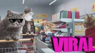 Gatos en el supermercado   Viral
