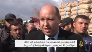 قلق من وفرة محاصيل البرتقال بتونس