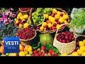 "Golden Autumn: Moscow Hosts Massive Farm Fair Showcasing the ""Fruits"" of Russian Labor"