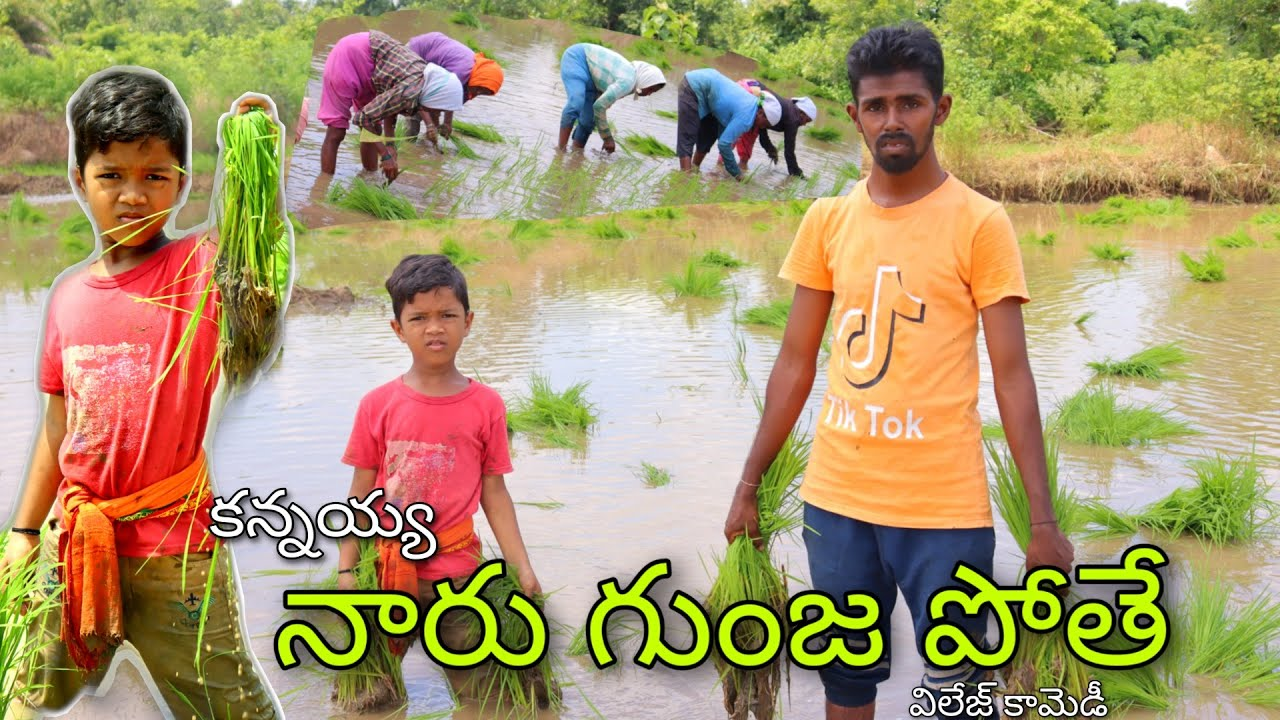Kannayya Polam Paniki Pothe | Village Paddy Farming | Kannayya Comedy | Trends adda