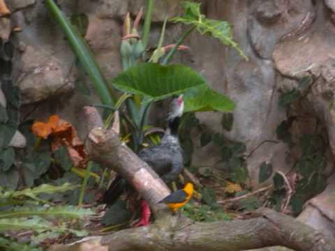 Cali Colombia Zoo