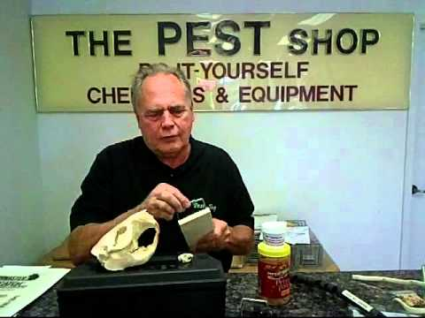 Best Baits For Rats And Mice - Michael Bohdan - The Pest Shop - Plano TX