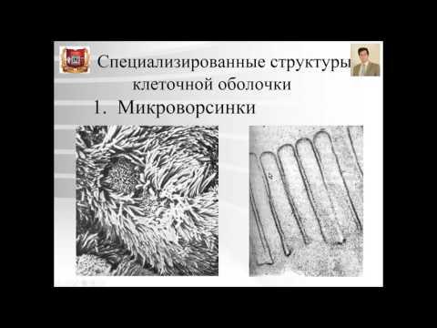 Видеоуроки гистология