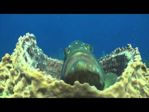 Cayman Jan 30  feb 06 2016 Movie