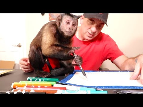 Cute Monkey Drawing With Markers!