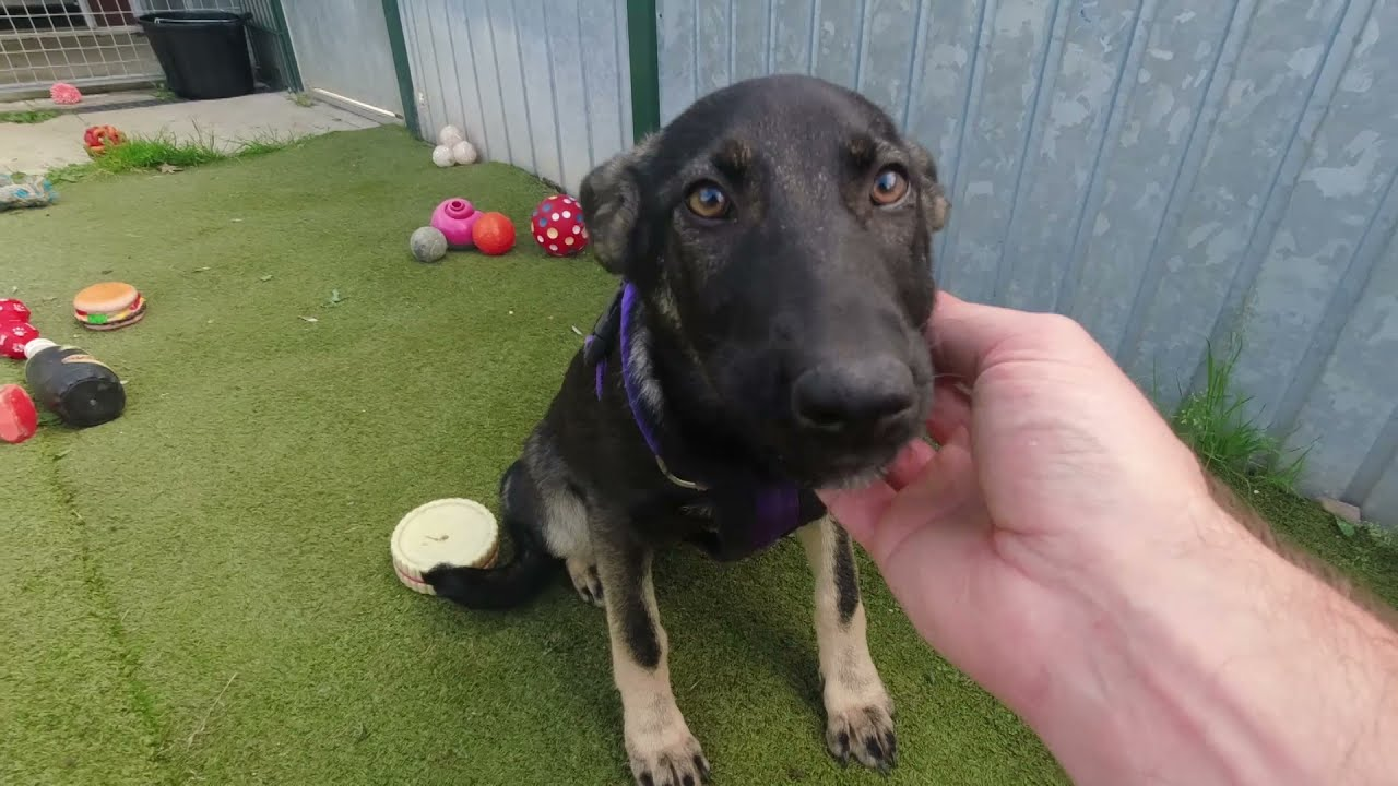 Meeting the new arrivals (all now rehomed)