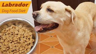 Labrador dog feeding - Dog Food Diet